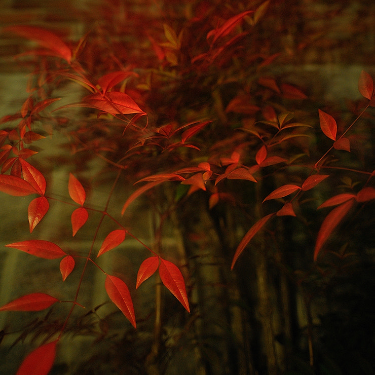 Photograph Turn Red by heydah on 500px