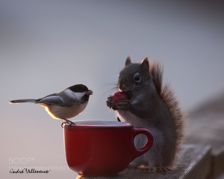 Photograph A gift exchange by Andre Villeneuve on 500px