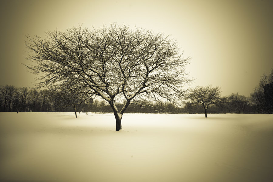 Photograph Winterland by Peter FK on 500px