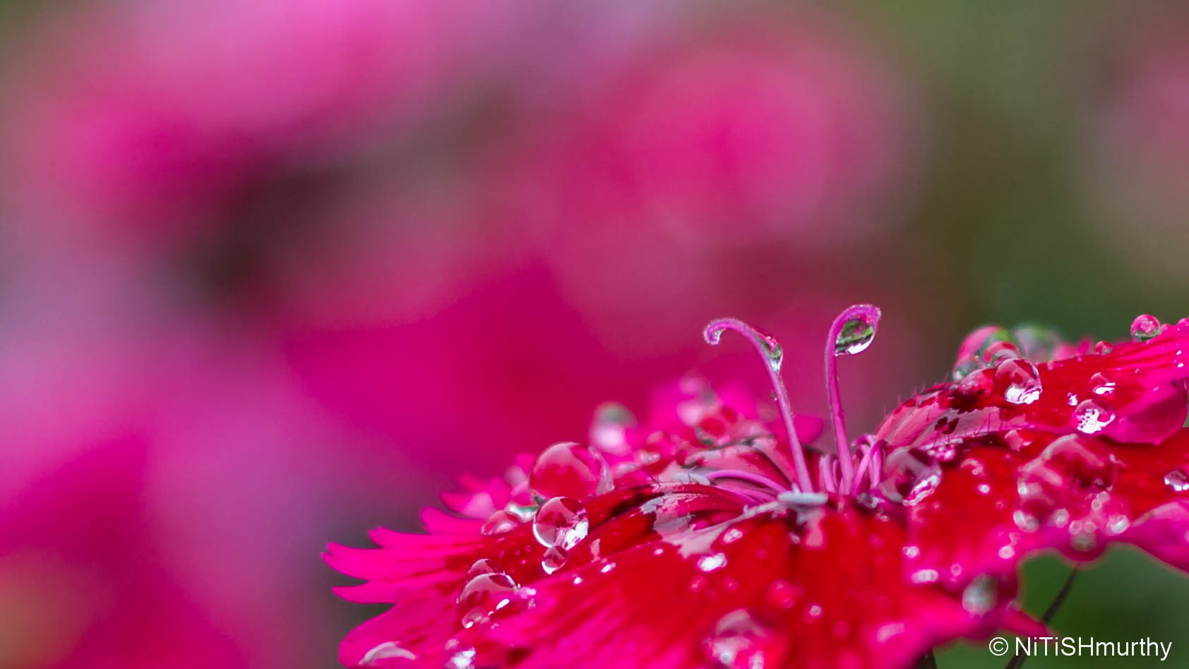 Photograph Dew Drops by Nitish Murthy on 500px