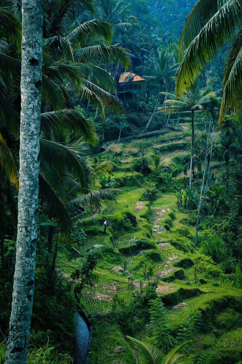 Photograph Bali by Isabell K. on 500px