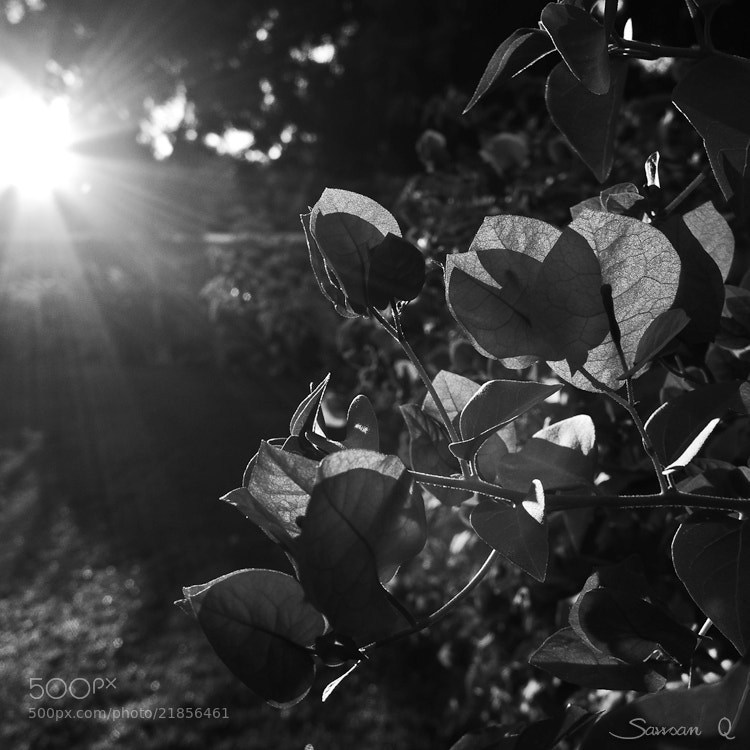 Photograph Catch the light .. by Sawsan Mohammed on 500px