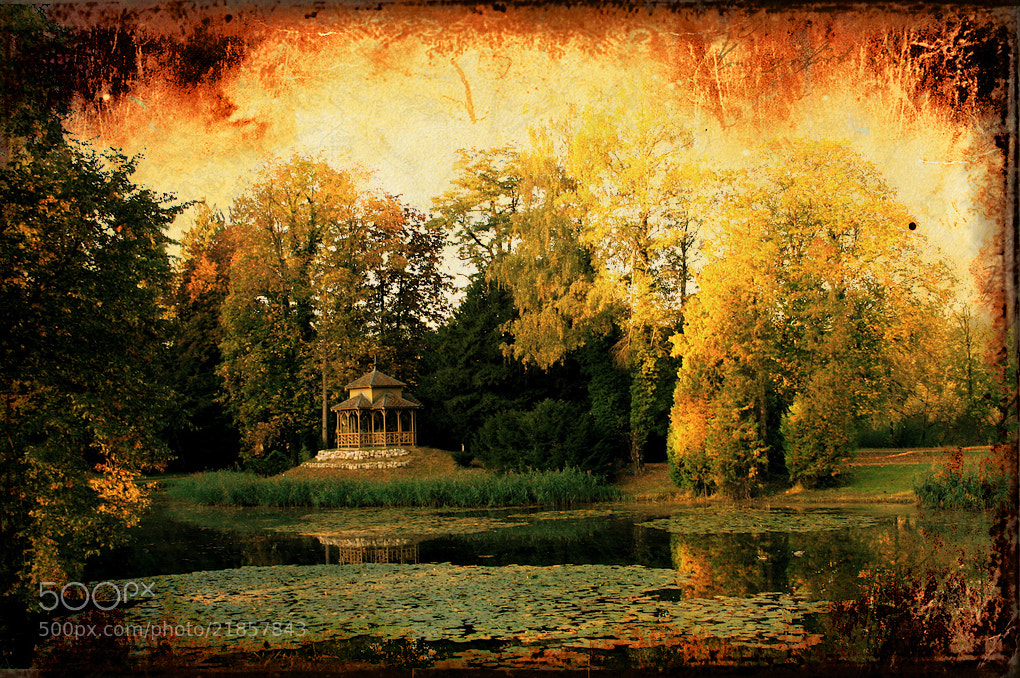 Photograph golden pond by Ueli Zellweger on 500px