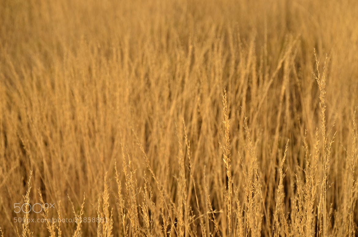 Photograph Grass by Sebastian Fast on 500px