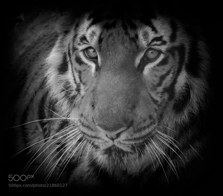 Photograph Majestic  by jamil ghanayem on 500px