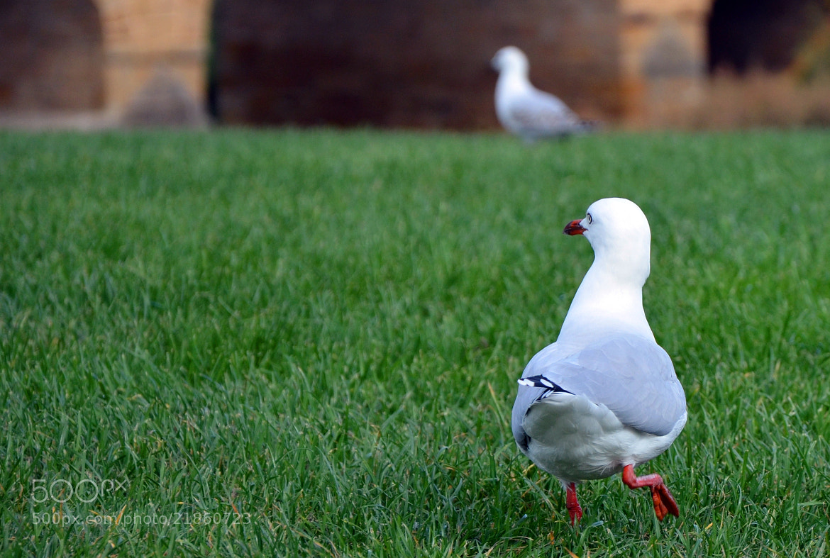 Photograph Gull's on the move! by Sebastian Fast on 500px