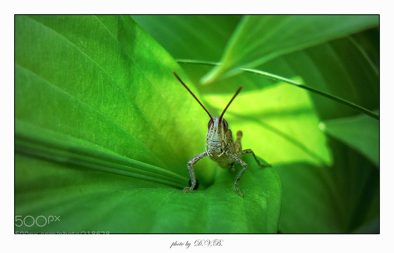 Photograph hopper.... by Dmitry Blink on 500px
