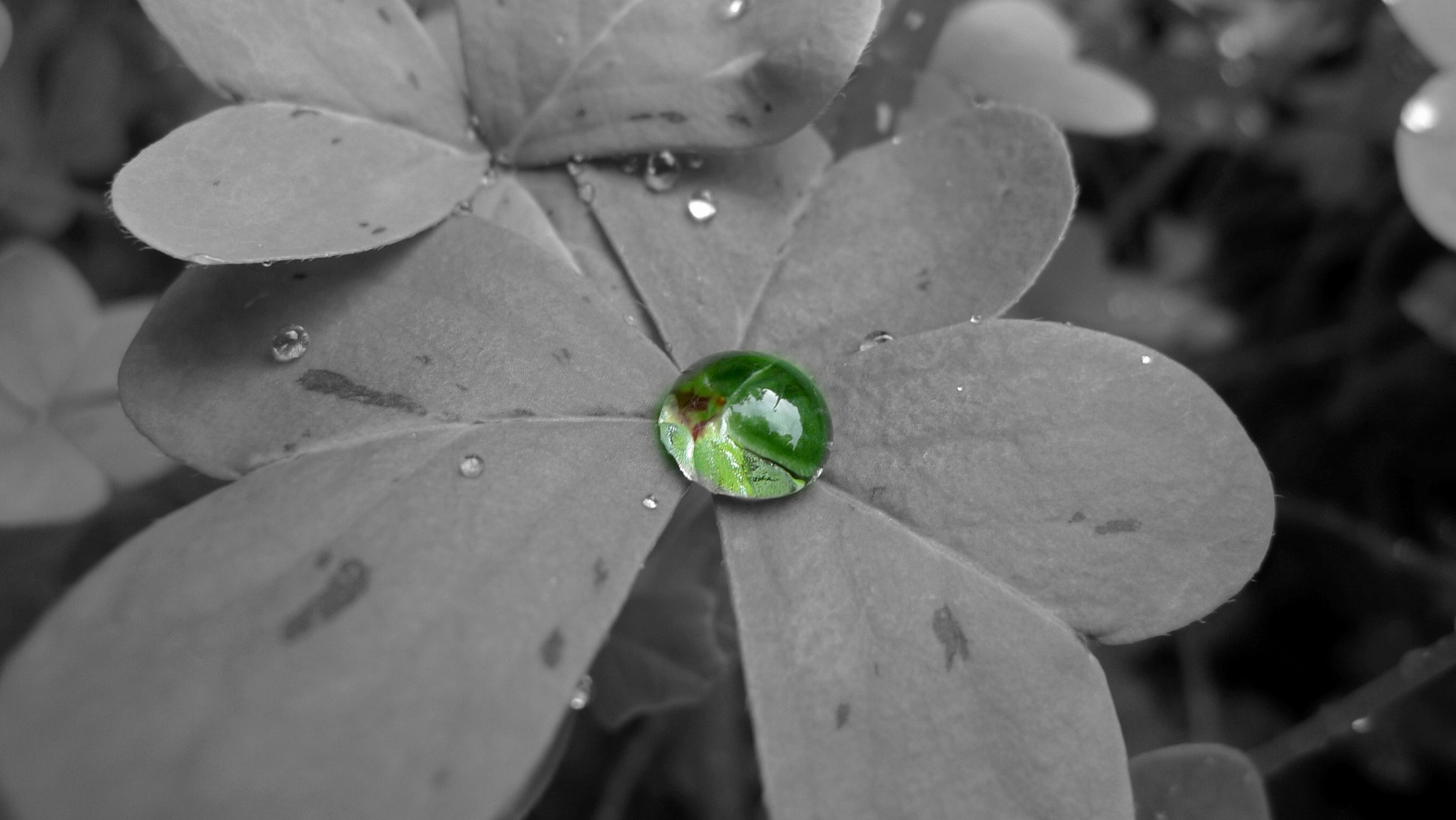 Photograph Just a drop by Dirk  on 500px