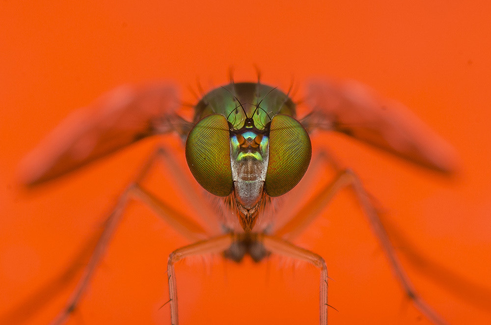 Photograph compound eyes by Marcus Kam on 500px