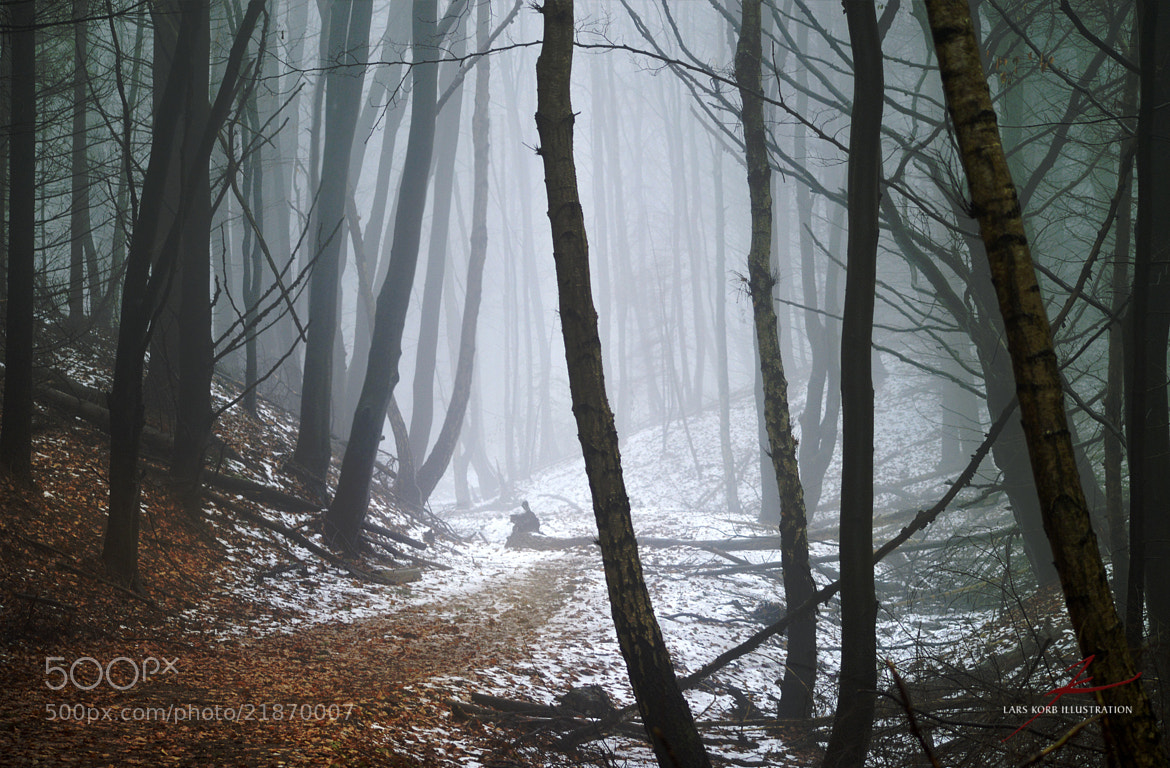Photograph Chilling Path by Lars Korb on 500px