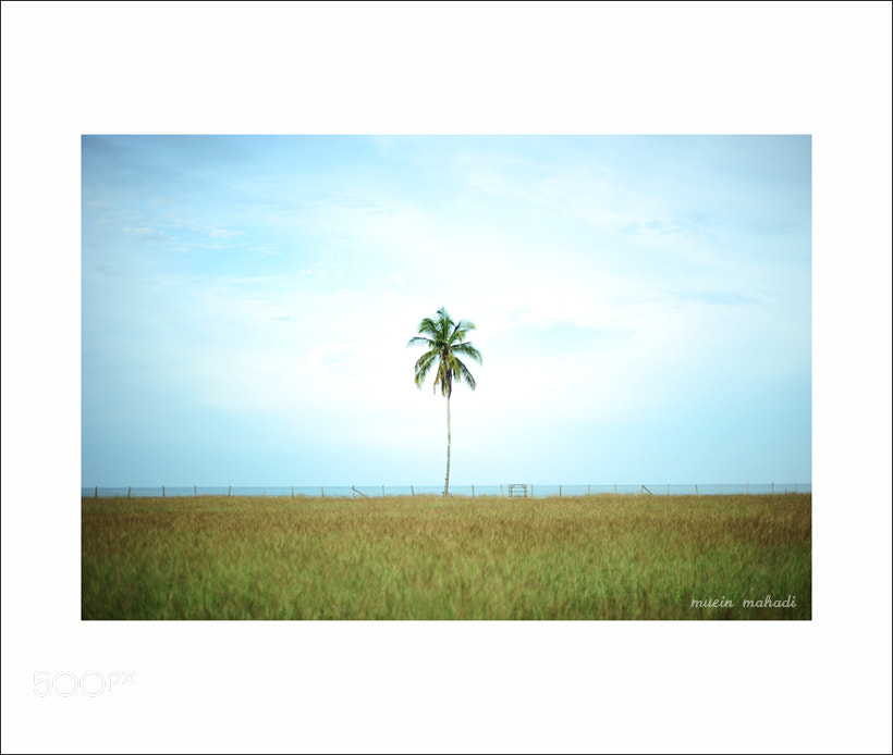 Photograph alone by muein mahadi on 500px