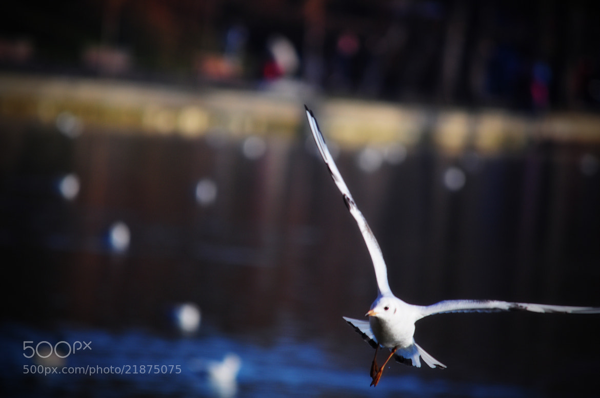Photograph Seagull by Olivia Dodon on 500px