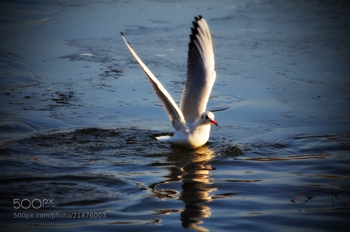 Photograph Taking off! by Olivia Dodon on 500px