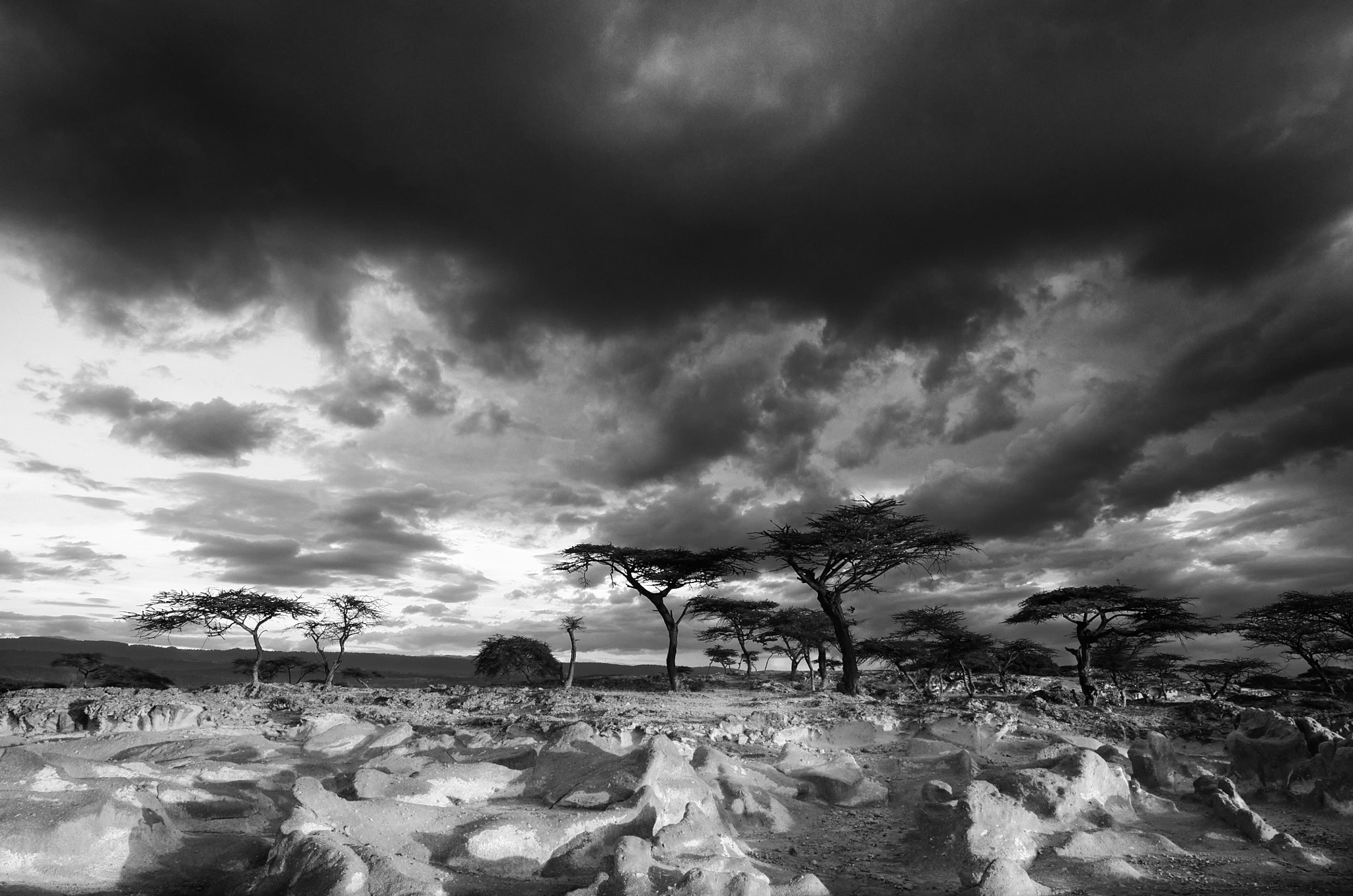 Photograph Acacia trees by Trevor Cole on 500px