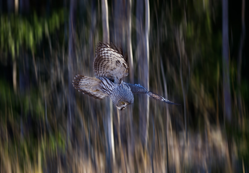 Photograph Diving for dinner by Peter Fallberg on 500px