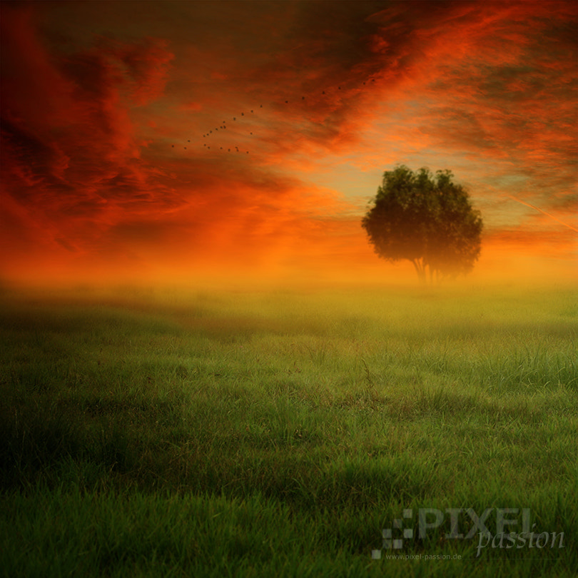 Photograph beautiful nature by Pixel Passion on 500px