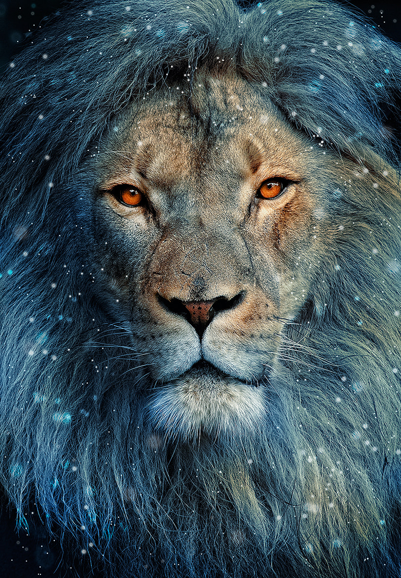 Photograph Lion In Winter by Deb Harder on 500px