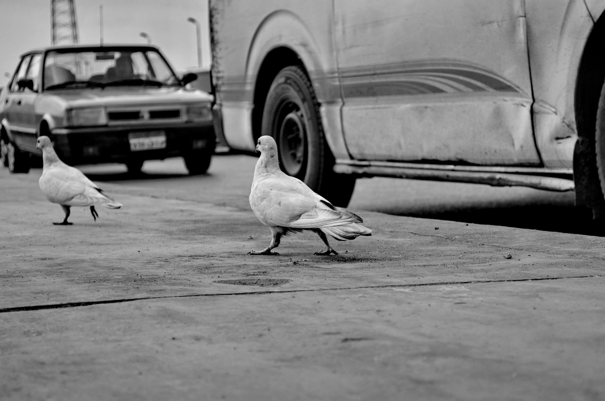 Photograph Cairo's pigeons by ionutmarcel on 500px