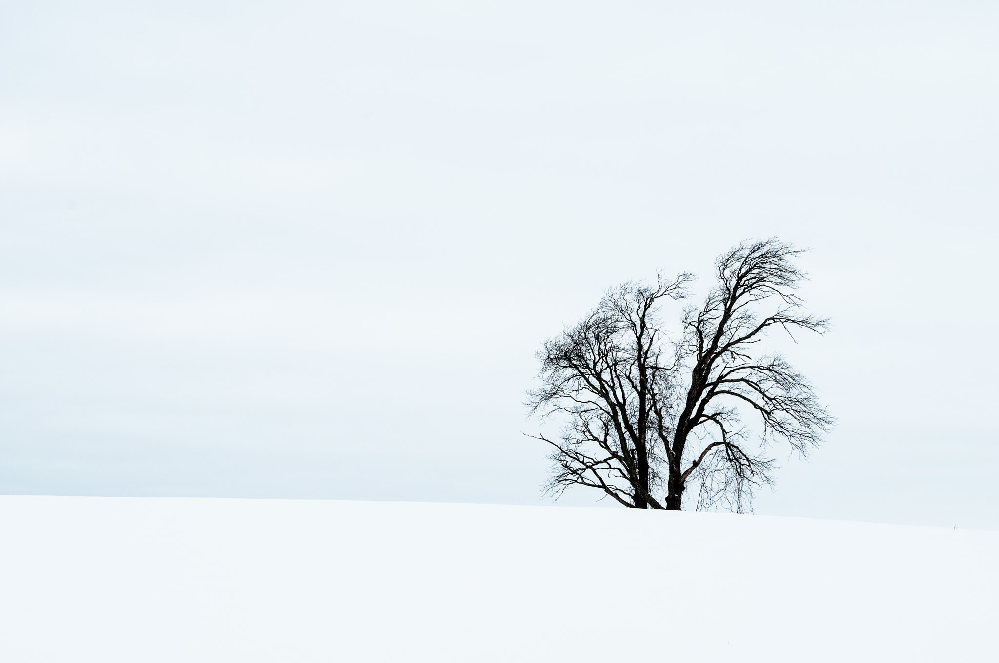 Photograph Winter in Southern ON by samer RIZK on 500px
