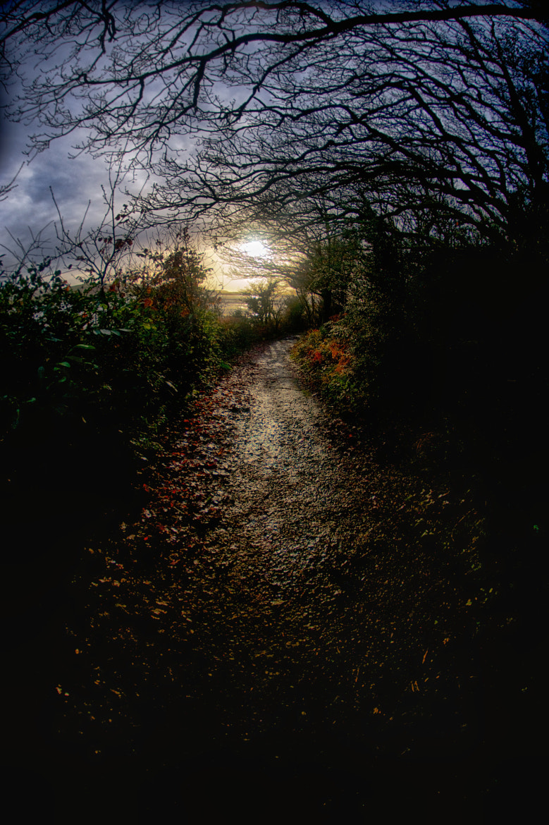 Photograph Fairy Trail by Craig Kirkwood on 500px