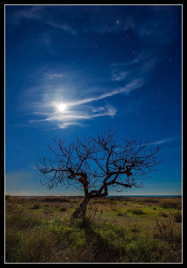 Photograph Lonely tree under the moon by Paco  Zaragoza on 500px