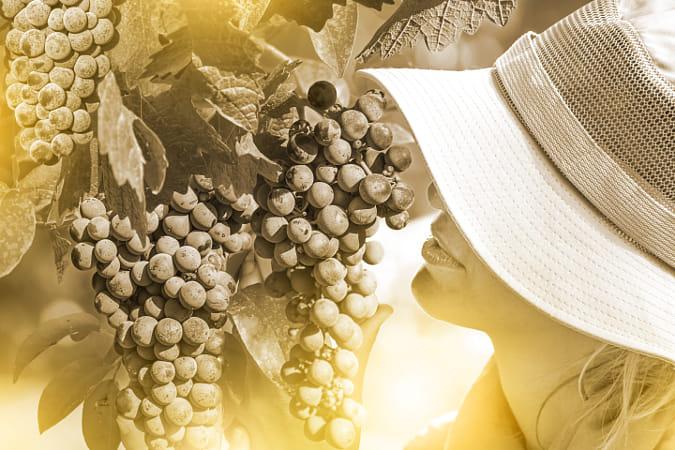 Farmer Checking Grapes