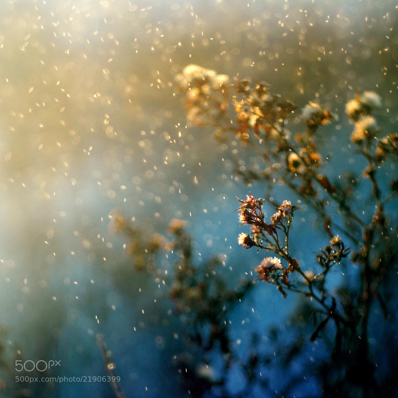 Photograph Angellore by Olga Radzikh on 500px