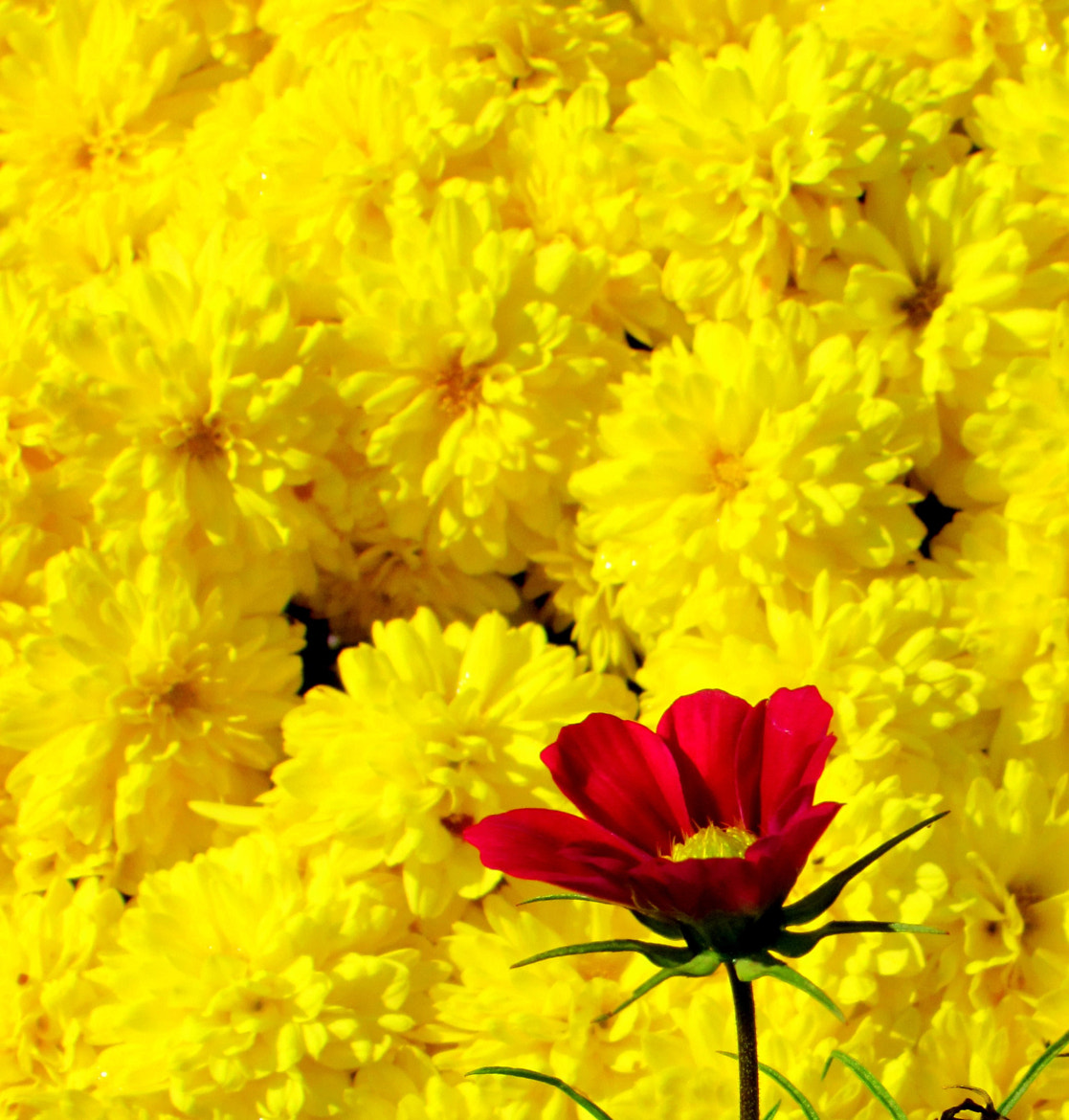 Photograph     Red on yellow   by Uta Abate on 500px