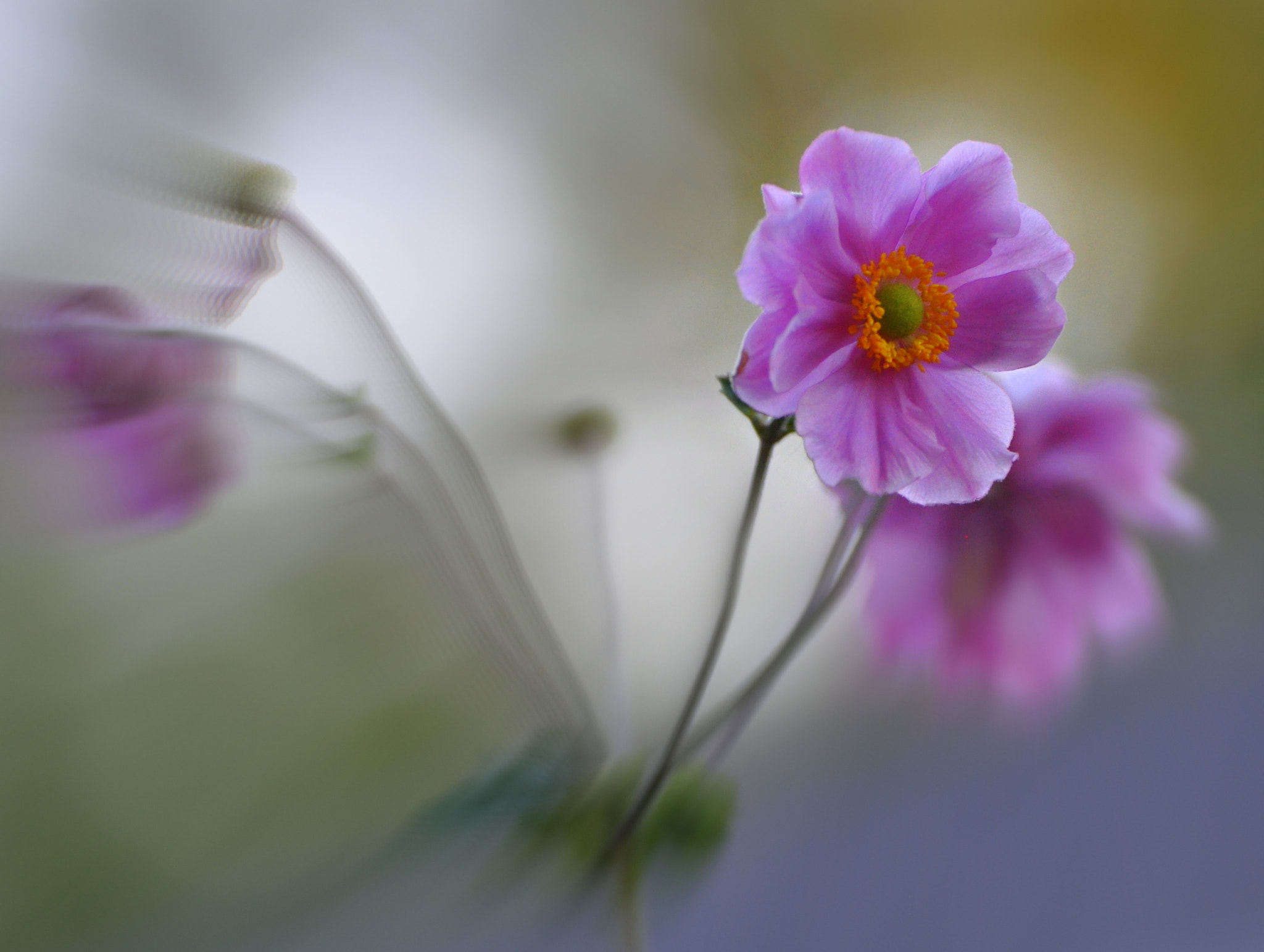 Photograph Pink by Uta Abate on 500px