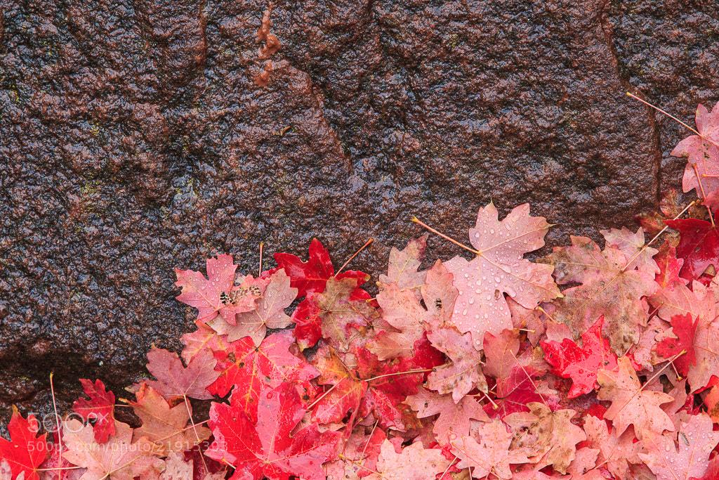 Photograph Fallen Leaves by Brenda Tharp on 500px