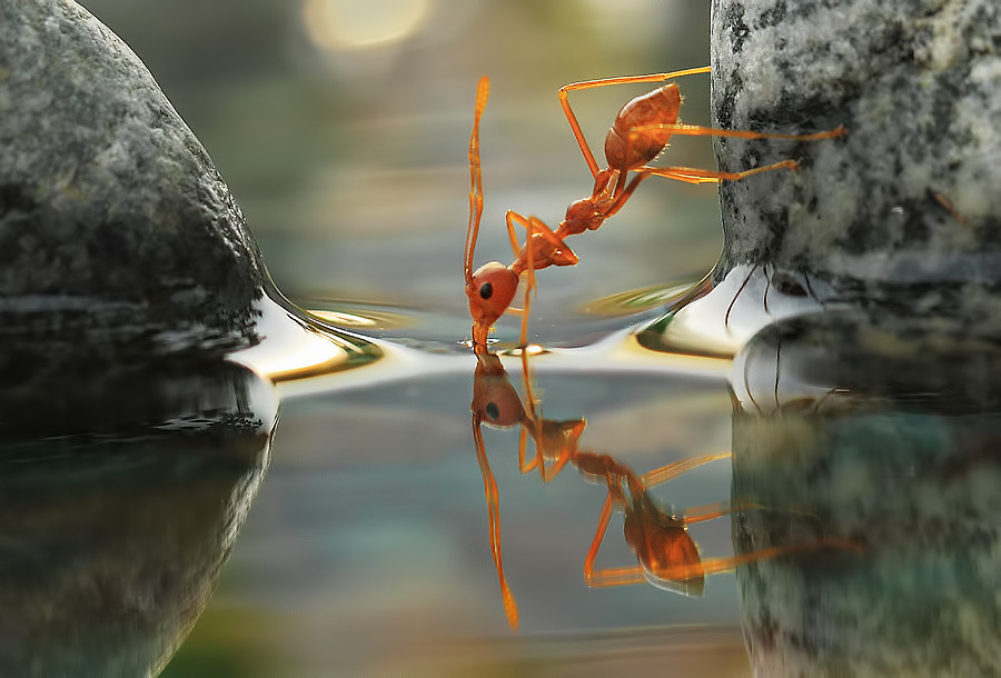 Drinking by Vincentius Ferdinand on 500px.com