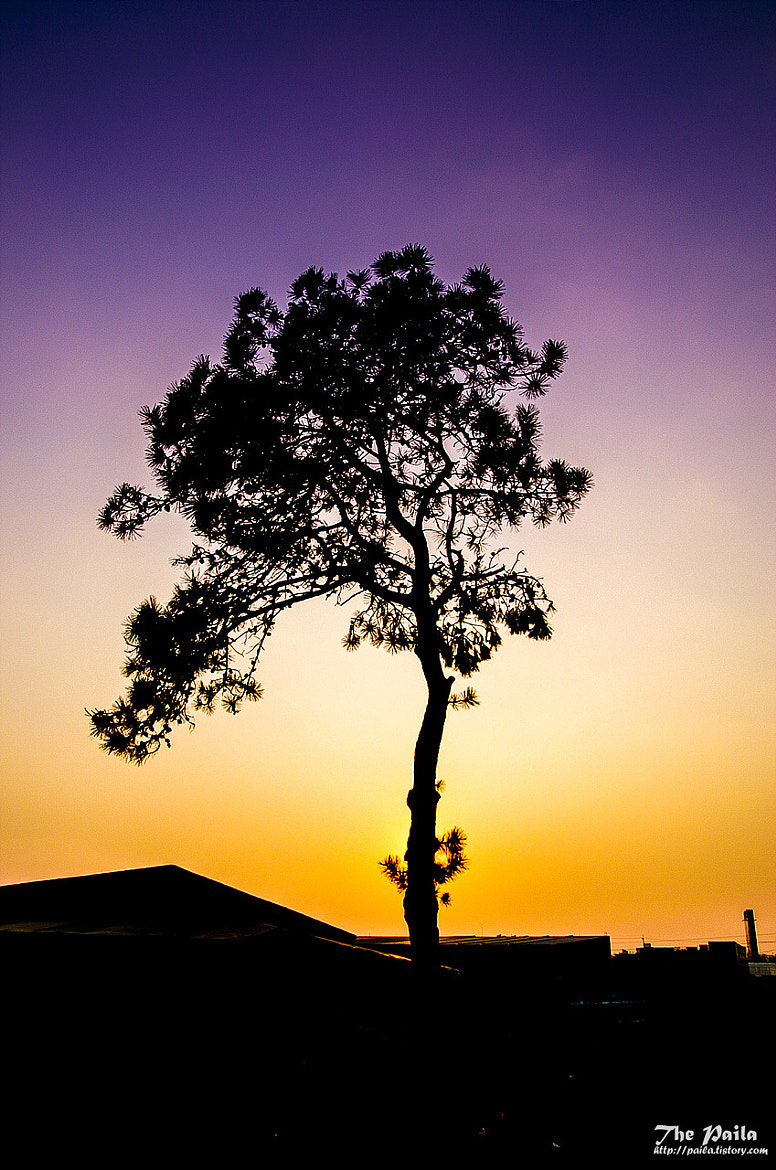 Photograph Single Tree by Yunho Jung on 500px