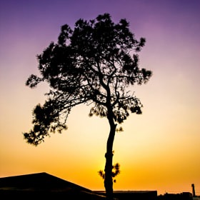 Single Tree by Yunho Jung (Thepaila)) on 500px.com