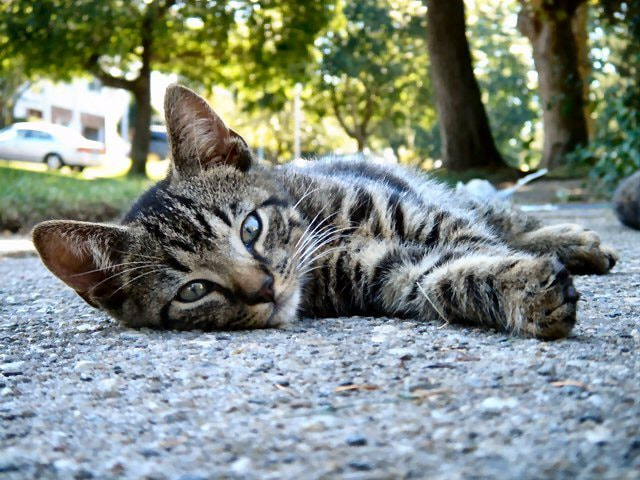 Photograph Street Kitty by JC Gafford on 500px