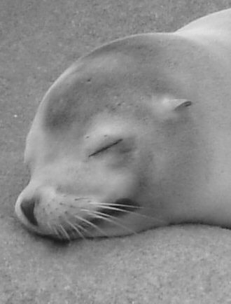 Photograph Sleepy Seal by JC Gafford on 500px