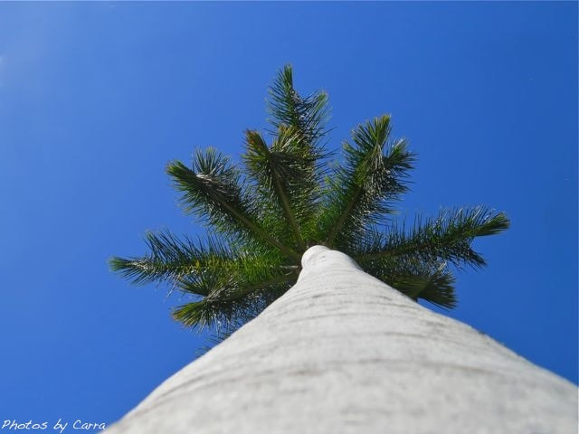 Photograph Up a palm tree by Carra Riley on 500px