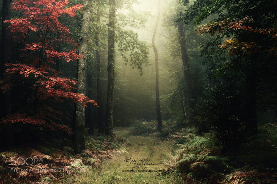 BROCELIANDE by Philippe MANGUIN (Philippe_manguin)) on 500px.com