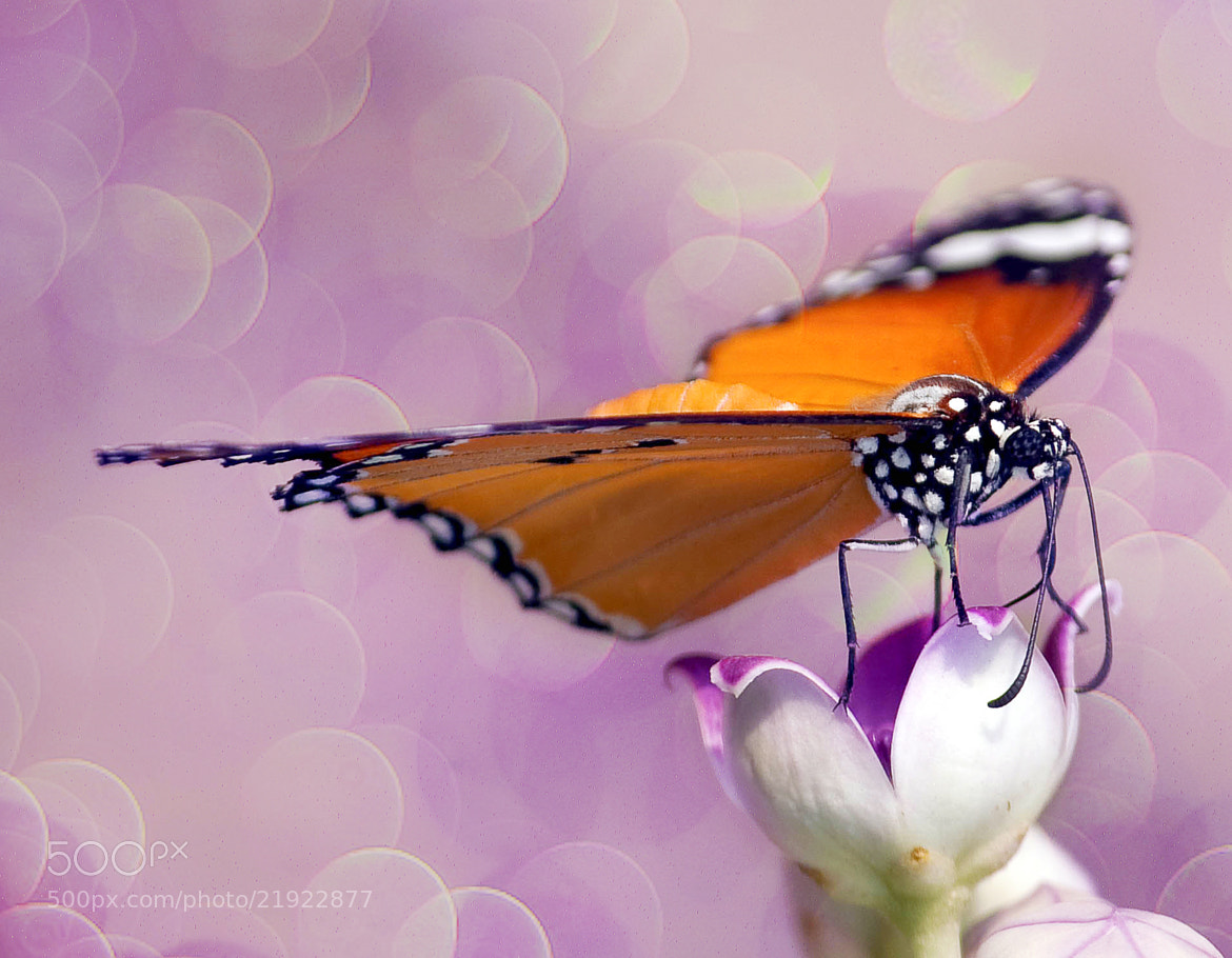Photograph The Butterfly by Jassi Oberai on 500px