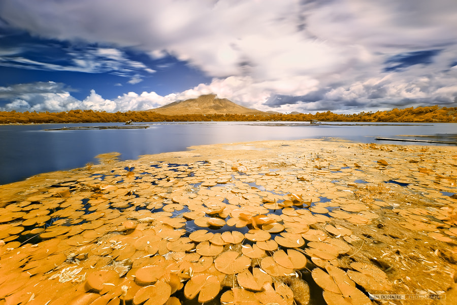 Photograph Golden Lilies by JM Donaire on 500px