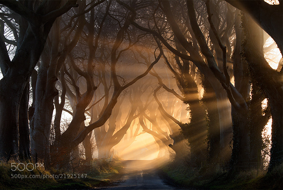Morning Gloryy - Capturing the Light - Ultimate Tips and Examples