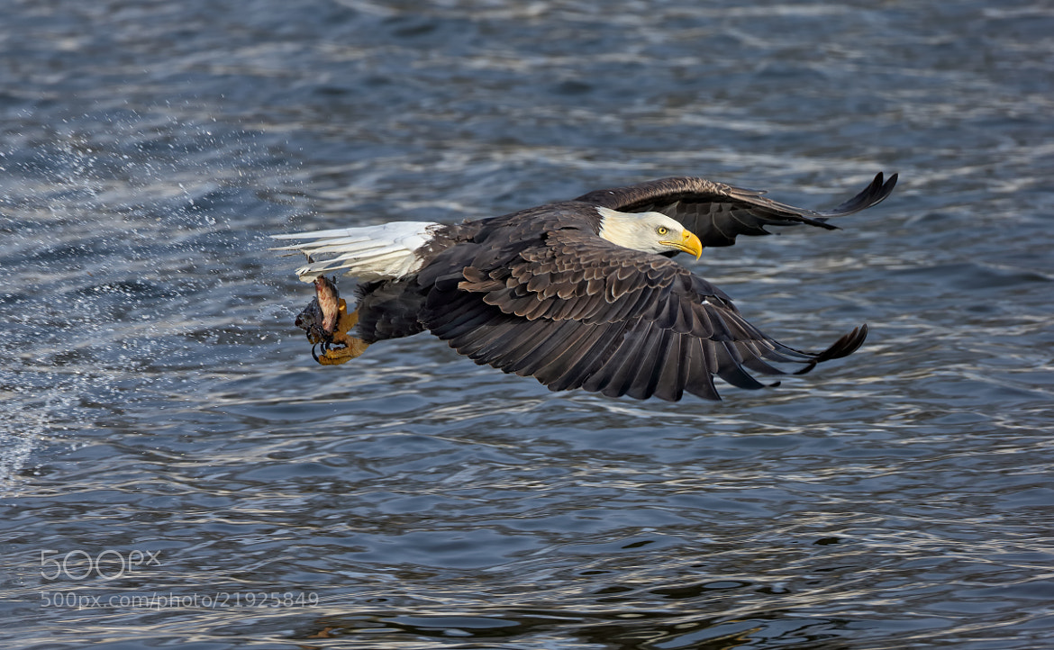 Photograph Gone Fish'n by Mark Theriot on 500px