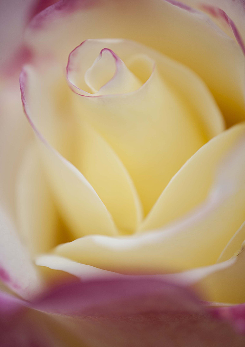 Photograph Double Delight 3 by Margaret Morgan on 500px