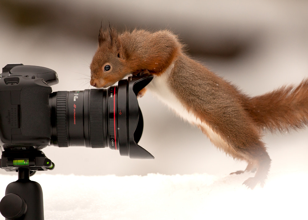 Photograph How Wide Is This Lens? by Giedrius Stakauskas on 500px