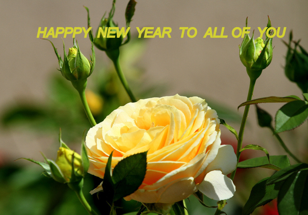 Photograph ALL THE BEST FOR 2013 by Rainer Leiss on 500px