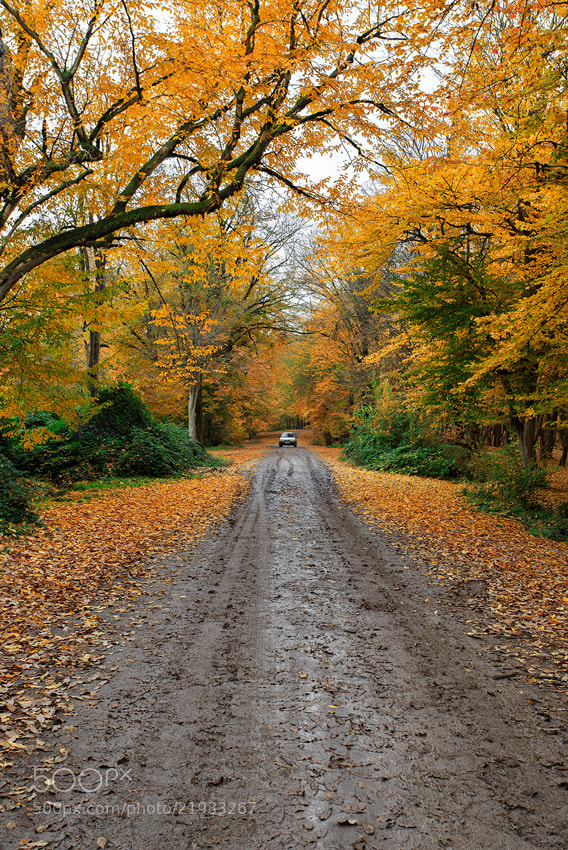 Photograph Dream Road by S'Javad Miri on 500px