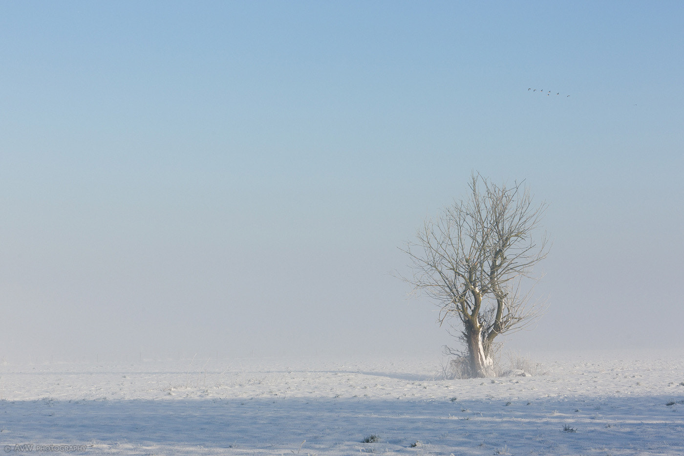 Photograph Lonesome Tree by Arnold van Wijk on 500px