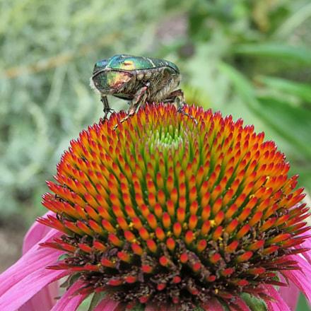 Beetle's life