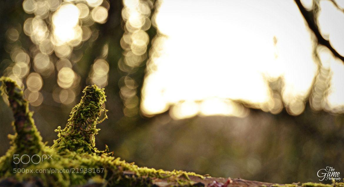 Photograph Bokeh  by The Game Photography on 500px