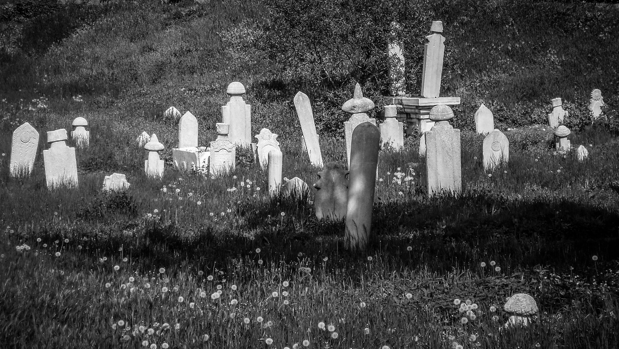 Photograph Lost Cemetery by Christian  MICHEL on 500px