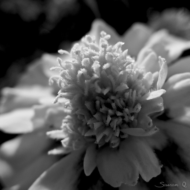 Photograph Brightful wishes .. by Sawsan Mohammed on 500px